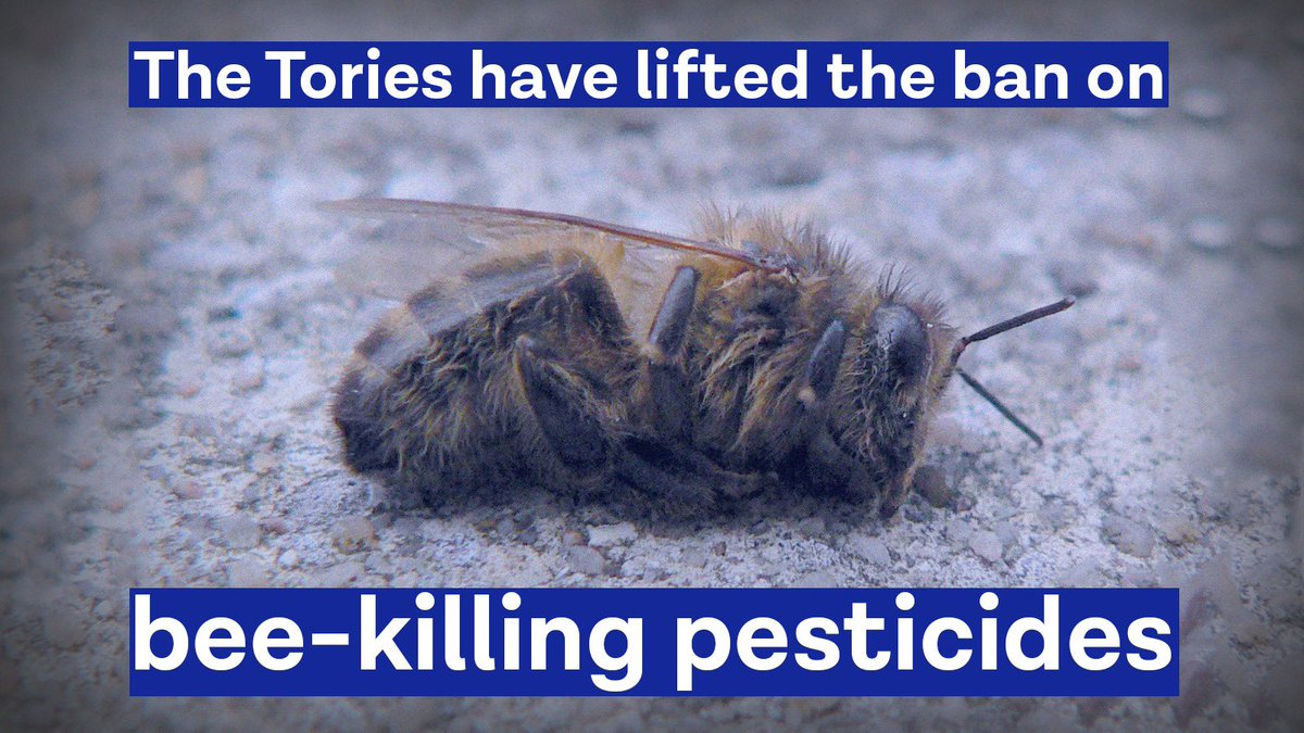 Last night MPs voted on an amendment @UKLabour tabled to the #EnvironmentBill to #savethebees🐝. Tory MPs voted to allow bee-killing pesticides to be used again. Labour MPs voted to save the bees. In a climate crisis there can be no going backwards.