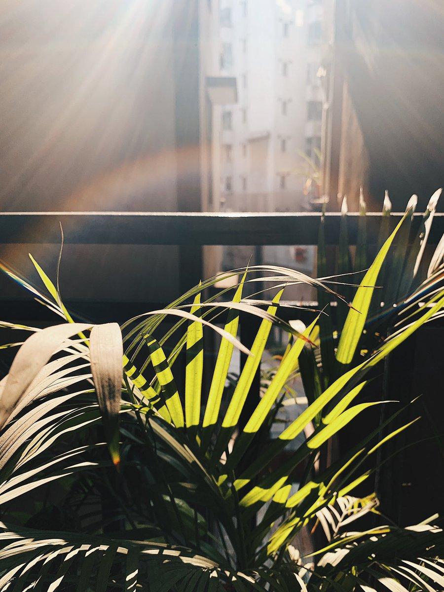 Winter sunshine ☀️ #shotoniphone #vsco