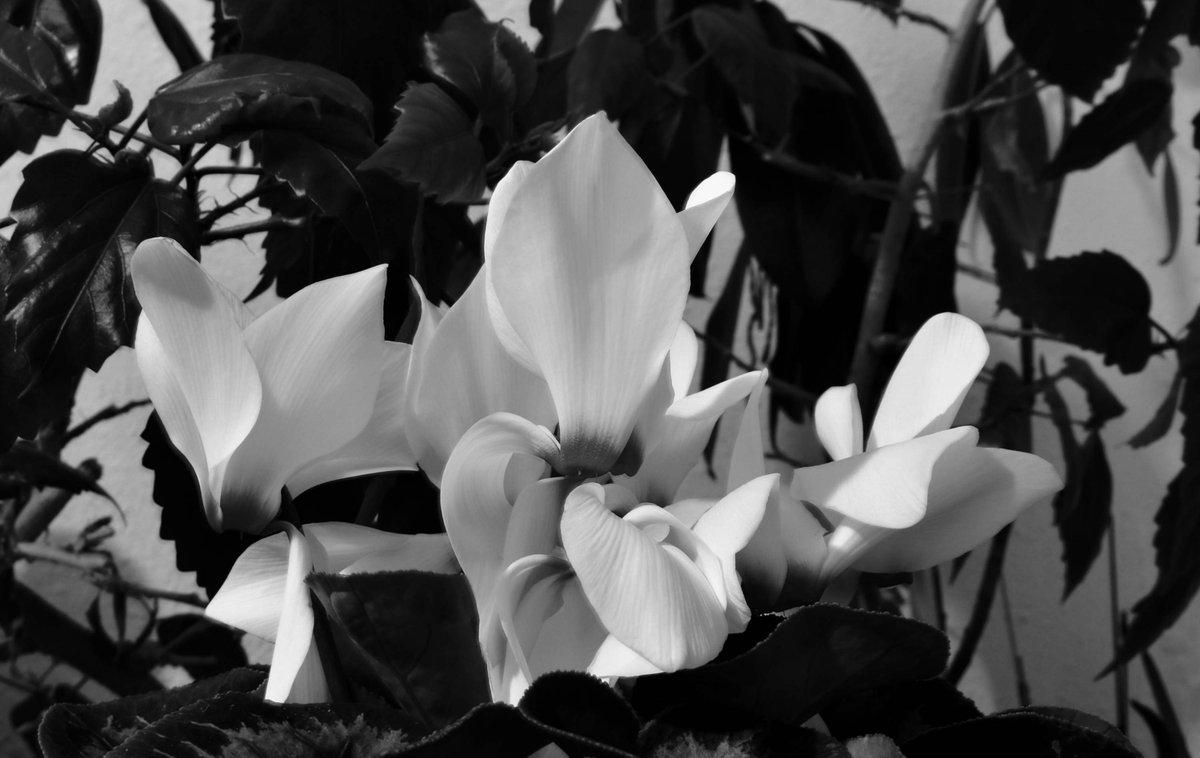 #Flowers #blackandwhite #monochrome #photo #photography #picture #image