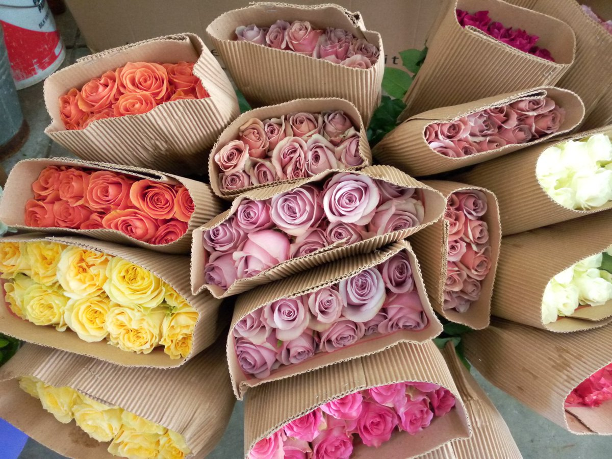 Today we received  none scented roses and some colourful luxurious   are welcomed to get a bouquet  or any bunch of fresh roses.#Flowers #flowersforvases