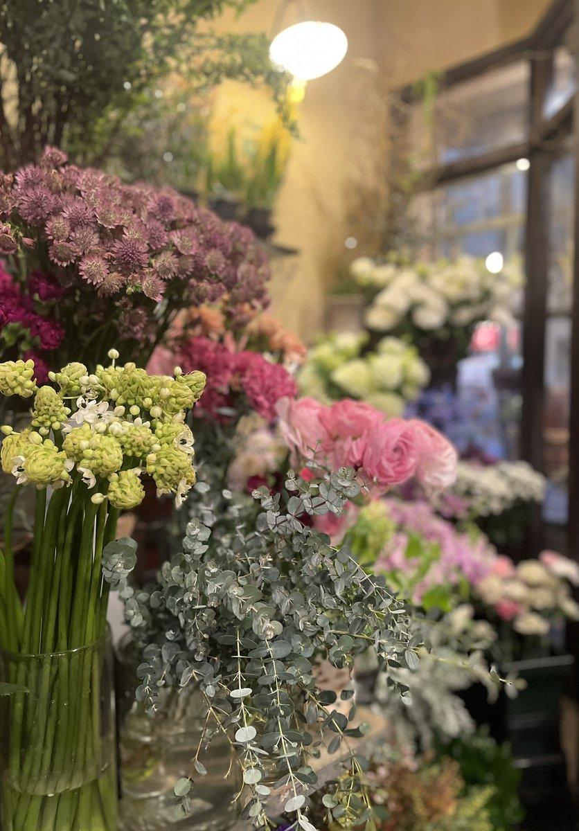 コンパクトなユーカリが入荷しました。 簡単にドライにもなるのでとても人気です。  大正ロマン フラワーショップアスター   #おうち時間 #flower #flowers #花のある暮らし #花のある生活 #花のあるくらし #アストランチア #ユーカリ #オーニソガラム #flowershop #flower