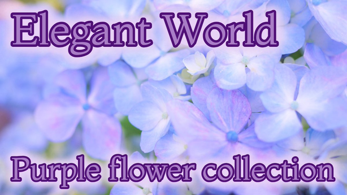↑↑↑↑↑ YouTubeで見てね✨ 優雅な世界(´・ω・`)  #flowers