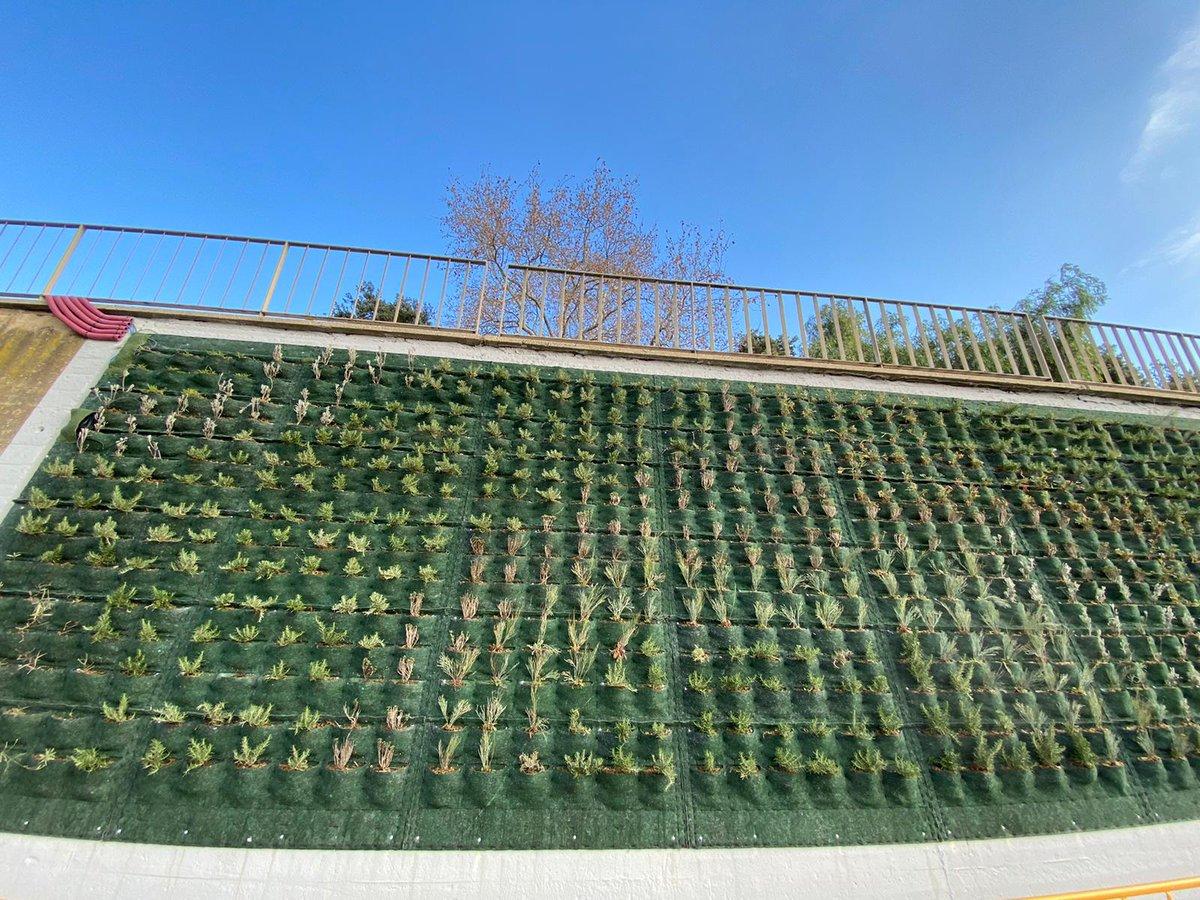 Prova pilot de renaturalització del mur del Parc fluvial del #Besòs  #refugiclimàtic #emergènciaclimàtica