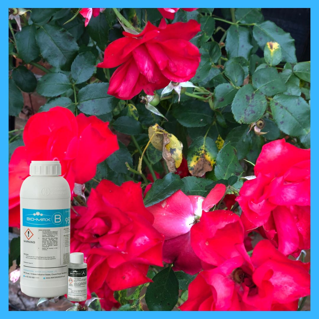 Roses are red Violets are blue BIO-MAX® is the right product for you! Interested? Head to our website to find out more!  #flower #horticulture #gardening #clean #safe #simple #effective #reliable #useful #preventative #gardens #flowers #aesthetic #pretty #picoftheday #interesting