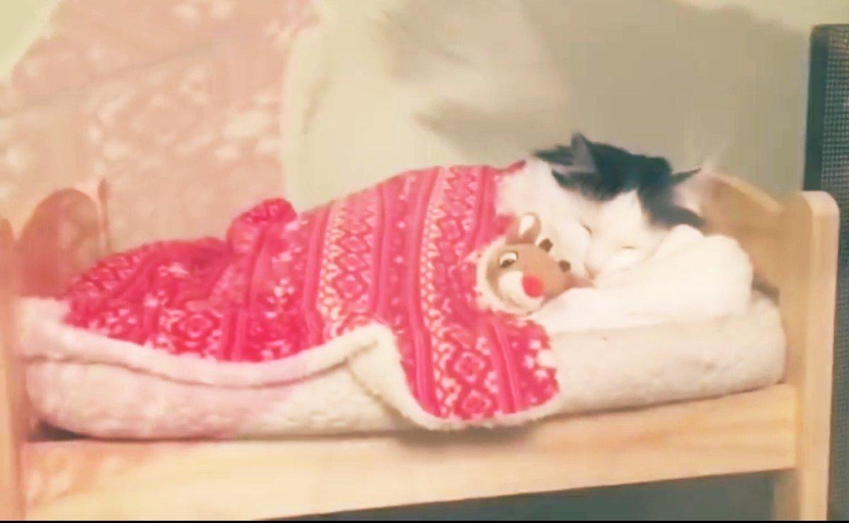 Sleeping in 💤💝💤💝💤💝💤💝💤#CatsOnTwitter #catlovers #thursdaymorning #thursdayvibes #inspiration #Motivation 🎀