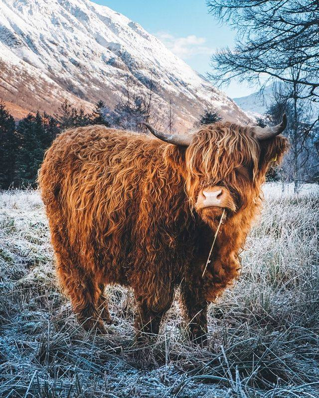 Glen Nevis, Highlands 💜 . #Scotland  #wednesdaythought : you will be exactly as happy as you decide to be ✨💕♒︎