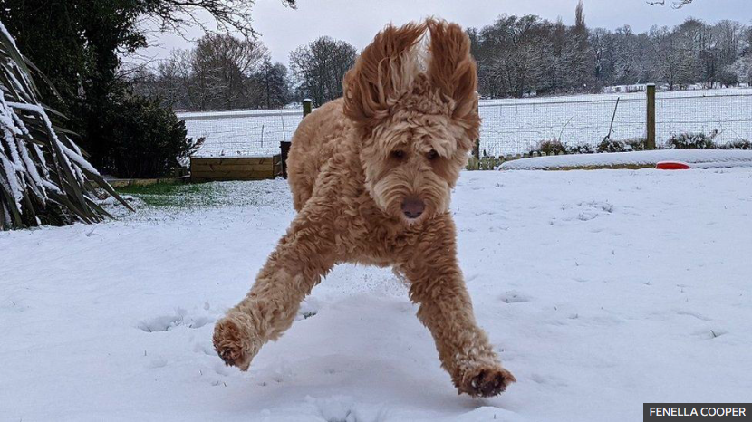 ☃️Fabulous photos of snow in the UK https://t.co/En6aGsFRnO https://t.co/k8rWmtWoBH