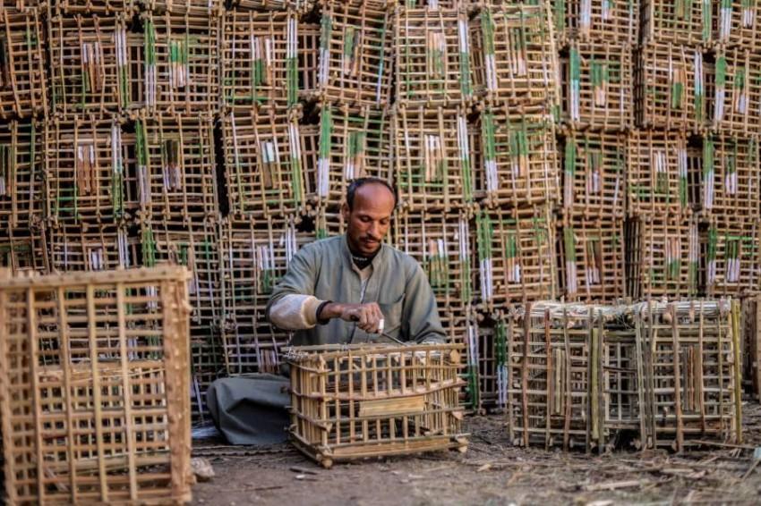بالصور.. «قفص» جريد النخل يقاوم الانقراض في صعيد #مصر  التفاصيل:   #الرؤية_بلا_حدود