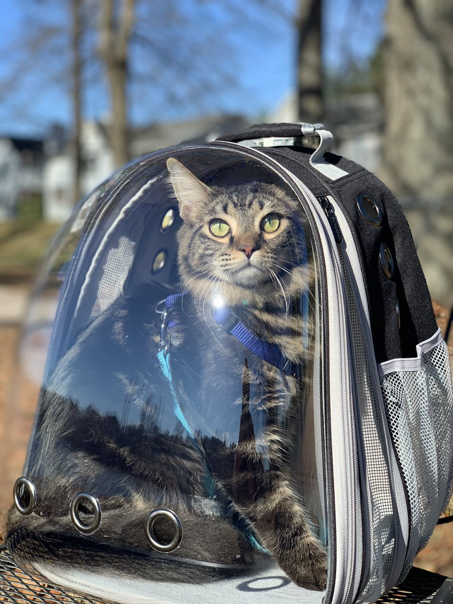 I bought my cat, Scamp, a backpack so we can go on walks together. He's still getting used to it, but he loves seeing new things! #dionnewarwick