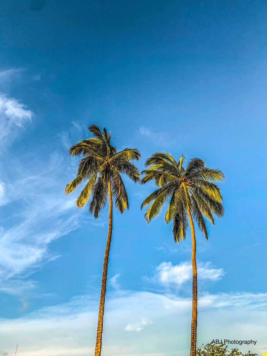 Two lone palms #Pacific #mexico #beach #beachlife #palmtrees #bluesky #PuertoVallarta #twopalms #photograghy #photooftheday #bikini #expat