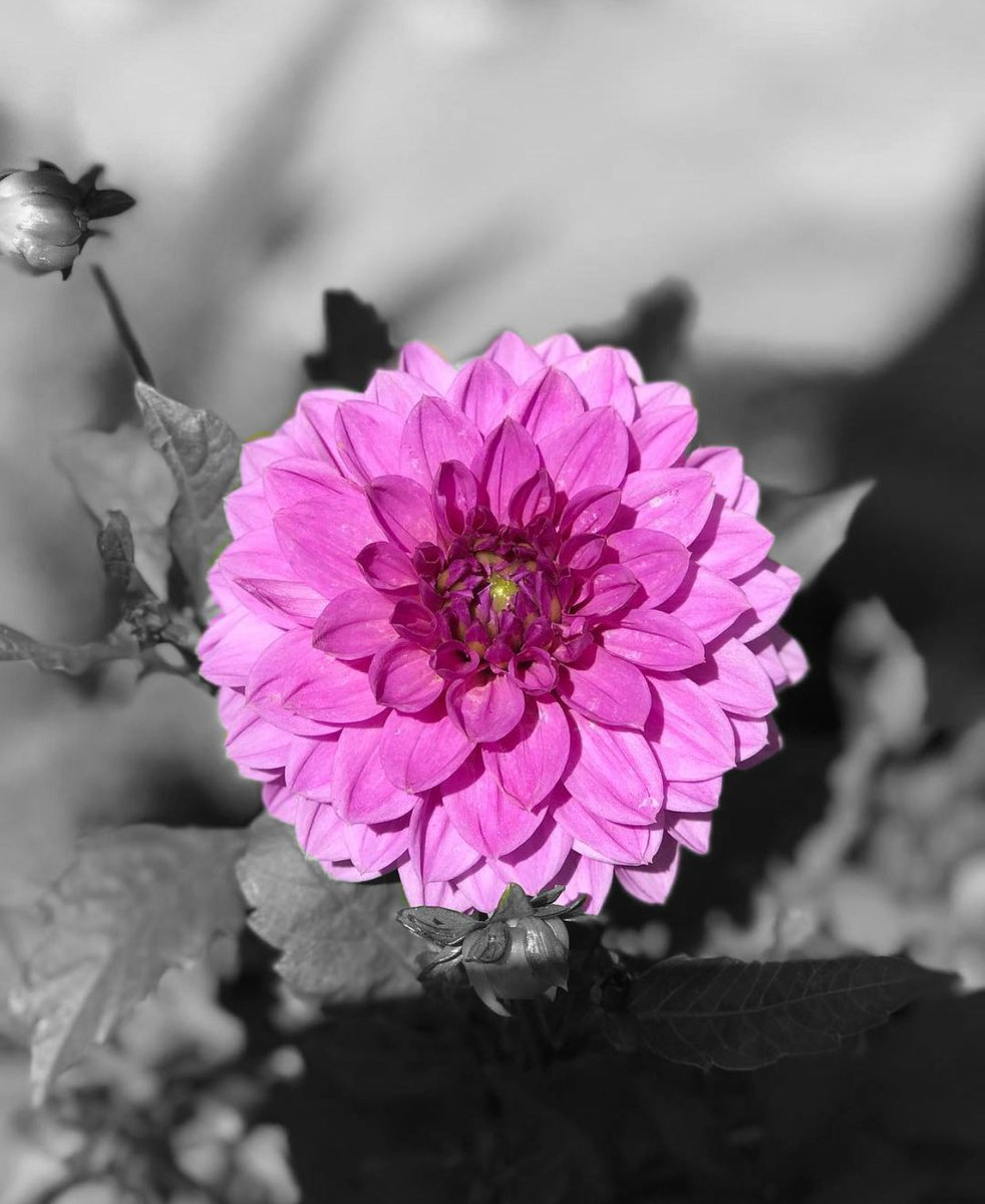 I am so obsessed with this damn app. #colorsplash #iphoneonly #oldpicnewedit #NaturePhotography #naturelovers
