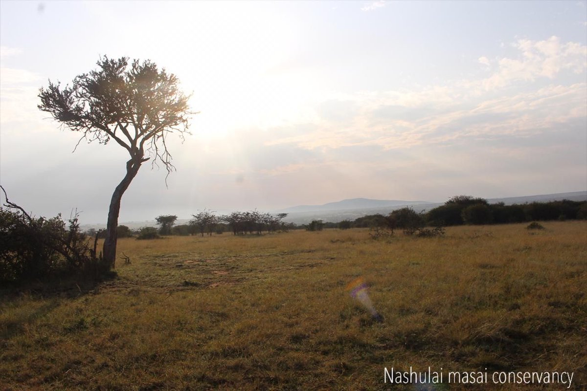 Our #Elders are amazed to see our land returning so quickly to how it used to be. The success of the Nashulai model of #conservation is a source of immense pride for our community. Our #Maasai culture & #spirit is rehabilitated as we rise with courage to meet today's challenges. https://t.co/xI307unxha
