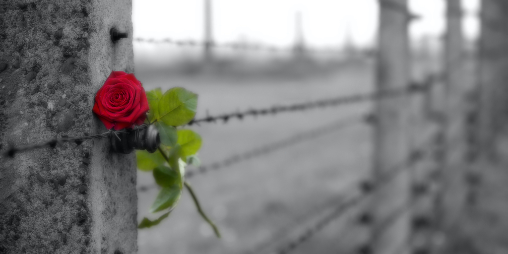 Today, on International Holocaust Remembrance Day, we honor the victims – millions of lives lost at the hands of Nazi Germany – and promulgate the salient message of survivors, vowing: Never again.  #WeRemember