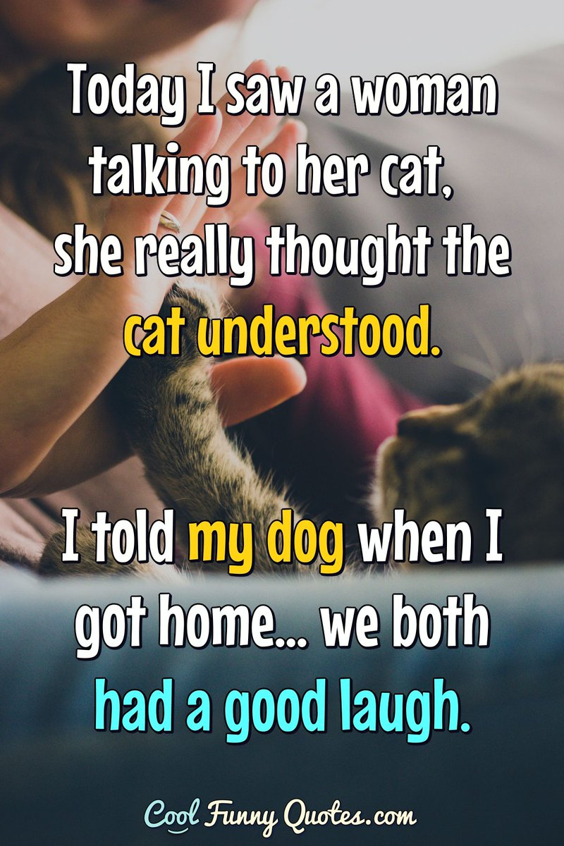Cool Funny Quotes On Twitter Today I Saw A Woman Talking To Her Cat She Really Thought The Cat Understood I Told My Dog When I Got Home We Both Had A
