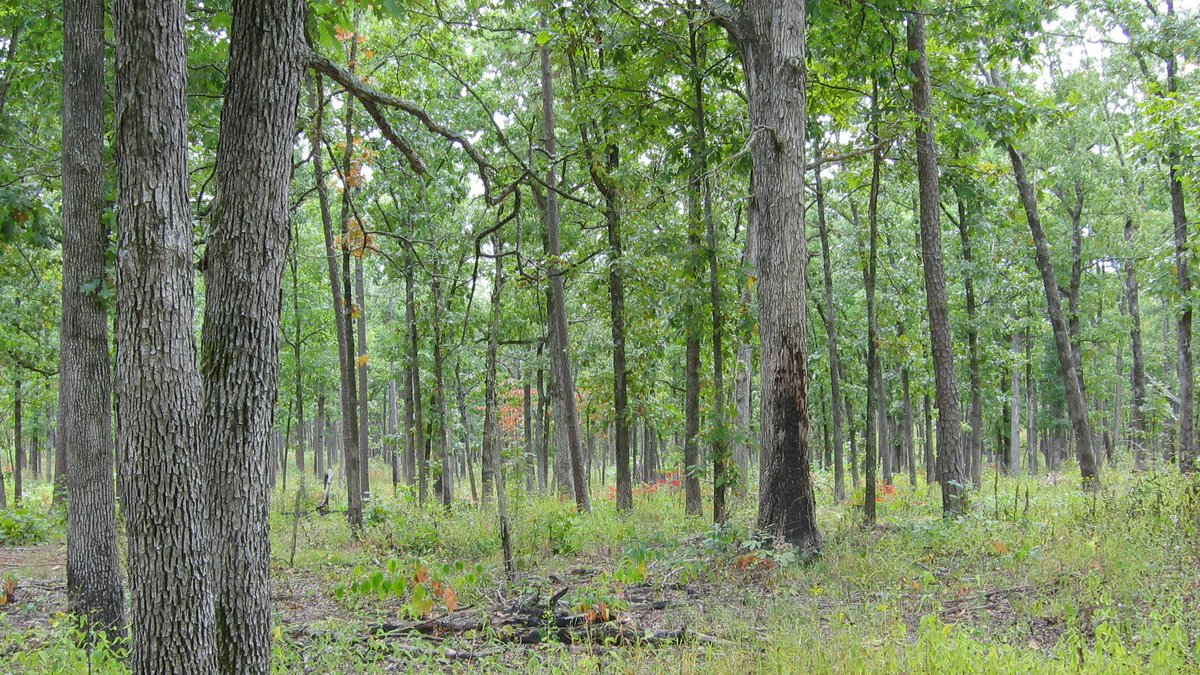 To better enhance and conserve #wildlife habitat and forested areas in its America's Crossroads Focal Region, the NWTF employs three foresters that deliver technical assistance and facilitate cost-sharing opportunities to private #landowners.