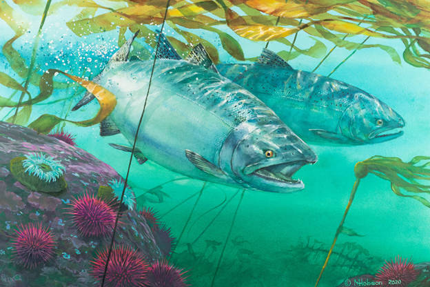 Mark Hobson, an award-winning artist from Tofino, B.C., has won @PSF's annual Salmon Conservation Stamp Competition.  Read more:  #conservefutue #fishing #stamps #philately #stampcollectors #conservationstamp