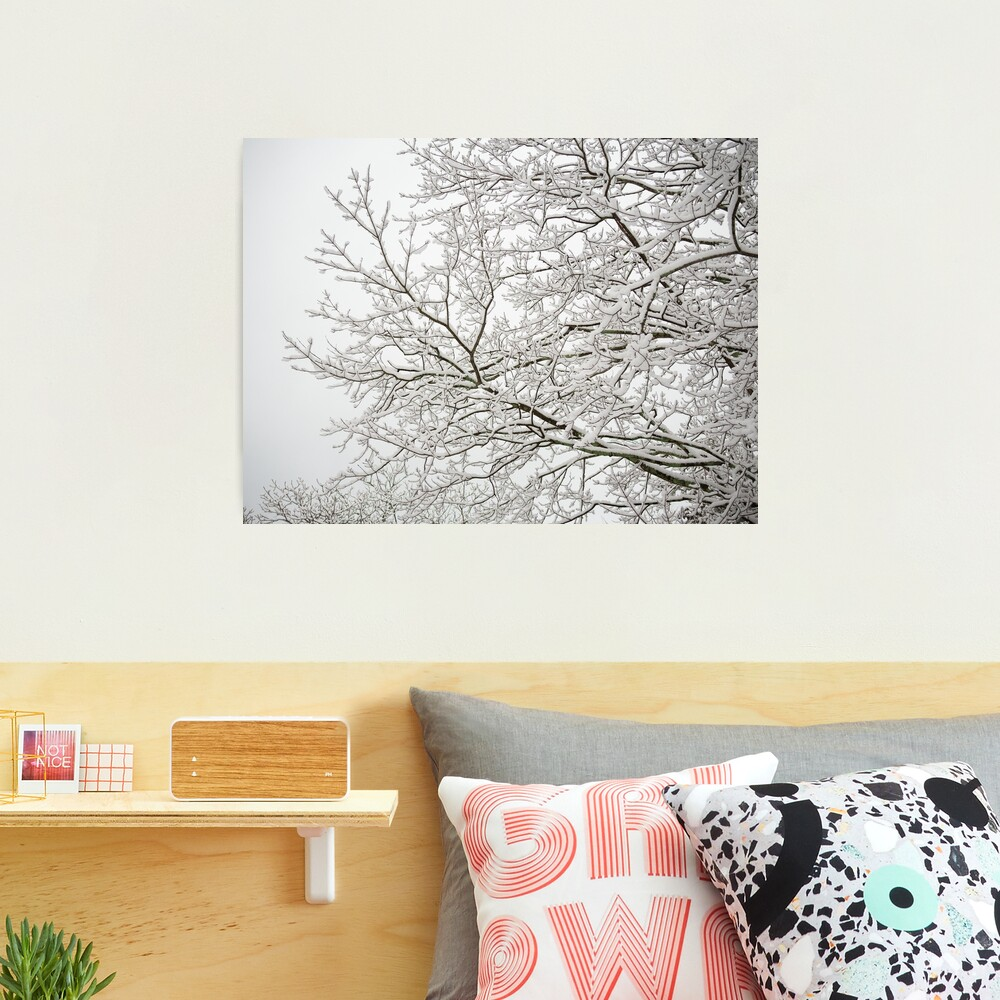 #Snow Photographic Print. Archival quality paper. Choice of luster for a fine grain pebble texture, or metallic for a glossy finish and exceptional visual interest and depth.   #hectorcantres #nature #snowing #snowday #snowy #snowfall #trees #winter