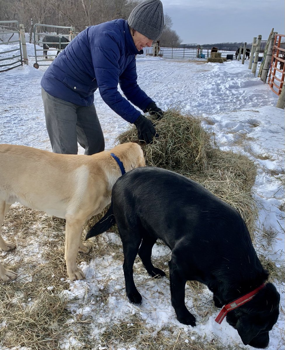 the pups helped with snack time for Mara B and her paddock pals this cold Wednesday  #emotionalwellbeing #therapyhorse #dogs #horse #mentalwellbeing #SuicideAwareness #kindness #Wednesday #January2021