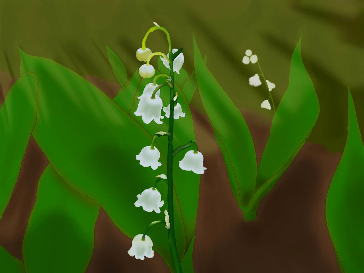 Convallaria Majalis a.k.a Lily of the Valley • I tried to capture the vibe of sunset coming in while tending to your garden and that light is just so strong before it gets dark out. Still getting used to the digital medium. #digitalart #floral #flowerart #Flowers