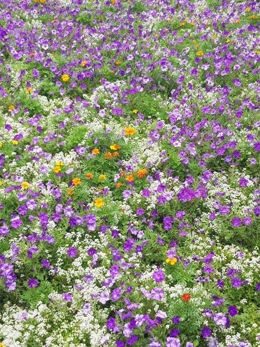 #Flowers #Nice