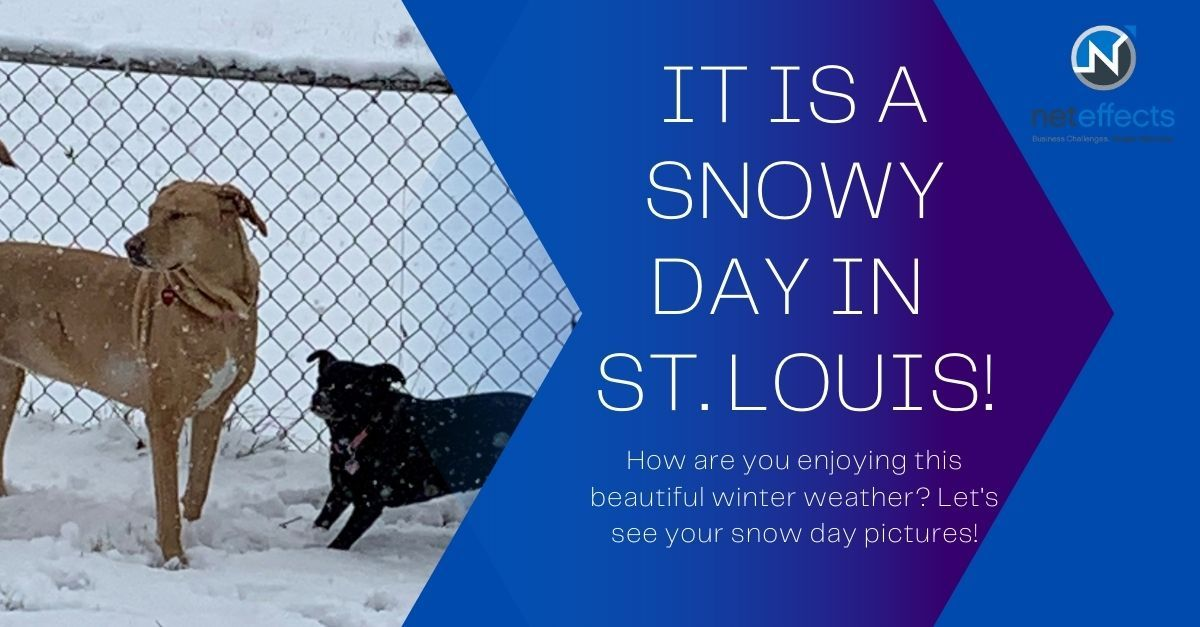 Everyone loves a good #snowday! Tera's pups enjoyed a snowy run in the yard. How are you making the most of this winter weather?