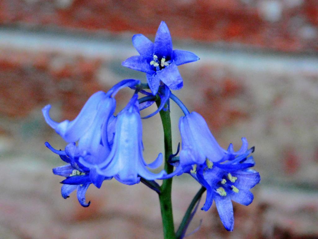 Vibrant blue. #flowers #nature #photographs