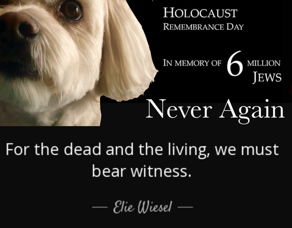 My thoughts are with my Jewish friends because it is a day to remember the lives lost in the Holocaust. We all need to remember them today so that it never happens again.❤️ #HolocaustRemembranceDay #HolocaustMemorialDay #NeverAgain #dogsoftwitter #dogs