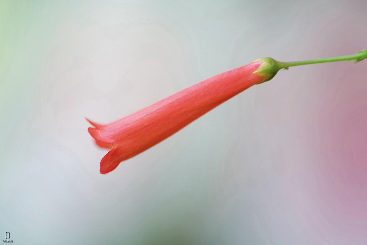 Flores de Enero #ABIF #photo #photography #photographer #flowers