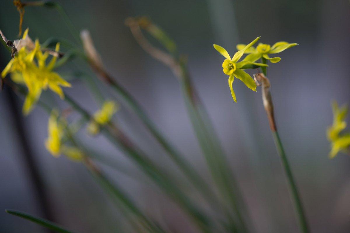おはよう  今日も穏やかな一日を…  #photography #coregraphy  #flowers