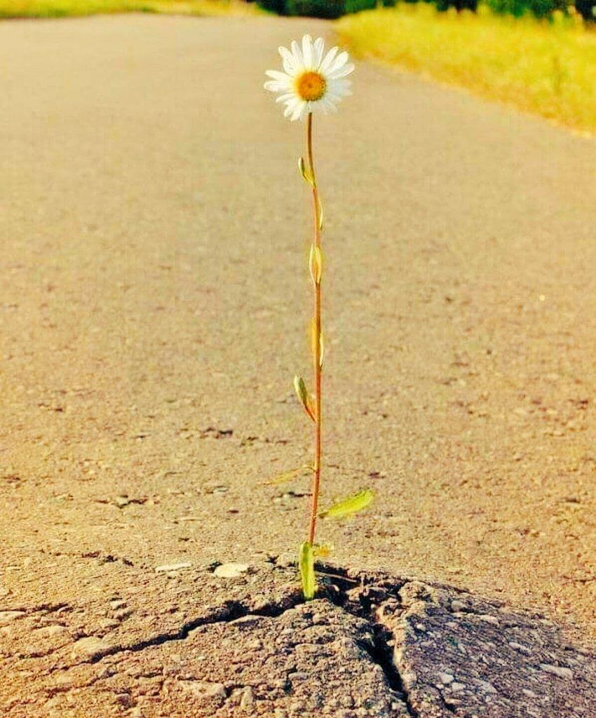 #liberte #cesttoiquidecide #Flowers  #depassementdesoi #handicap #Societe #rebellious #posetalegende belle soirée et douce nuit... et n'oubliez jamais : vous êtes maîtres de votre destin, #acoeurvaillant