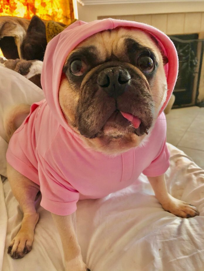 """I'm a widdle pinky sea lion!"" 🦭 -Max  #max #pug #dog #sealion #seal #pink #pinkaesthetic #boyswearpinktoo #zen #underthesea #seasausage #seapup #puglife #puglove #doglove #hugs #kisses #lovemydog #doglover #love #loveyoutothemoonandback 💋"