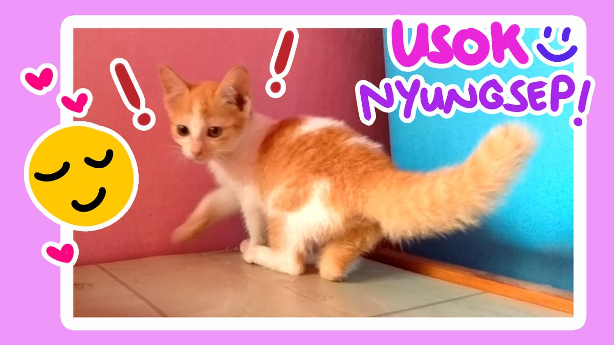 "Usok is Back!! ""Nyungsep?"" 😹👋💞 New Video Update!  💟   #CatsOfTwitter #SUNSOK #USOK #MEOLIBER #MEOLIBERFAMILIA #CAT #KITTEN #catlovers  #catlife #kucing  #ねこ #カエル #子猫 #CuteCat  #catsofinstagram  #ねこより #kittensoftwitter"