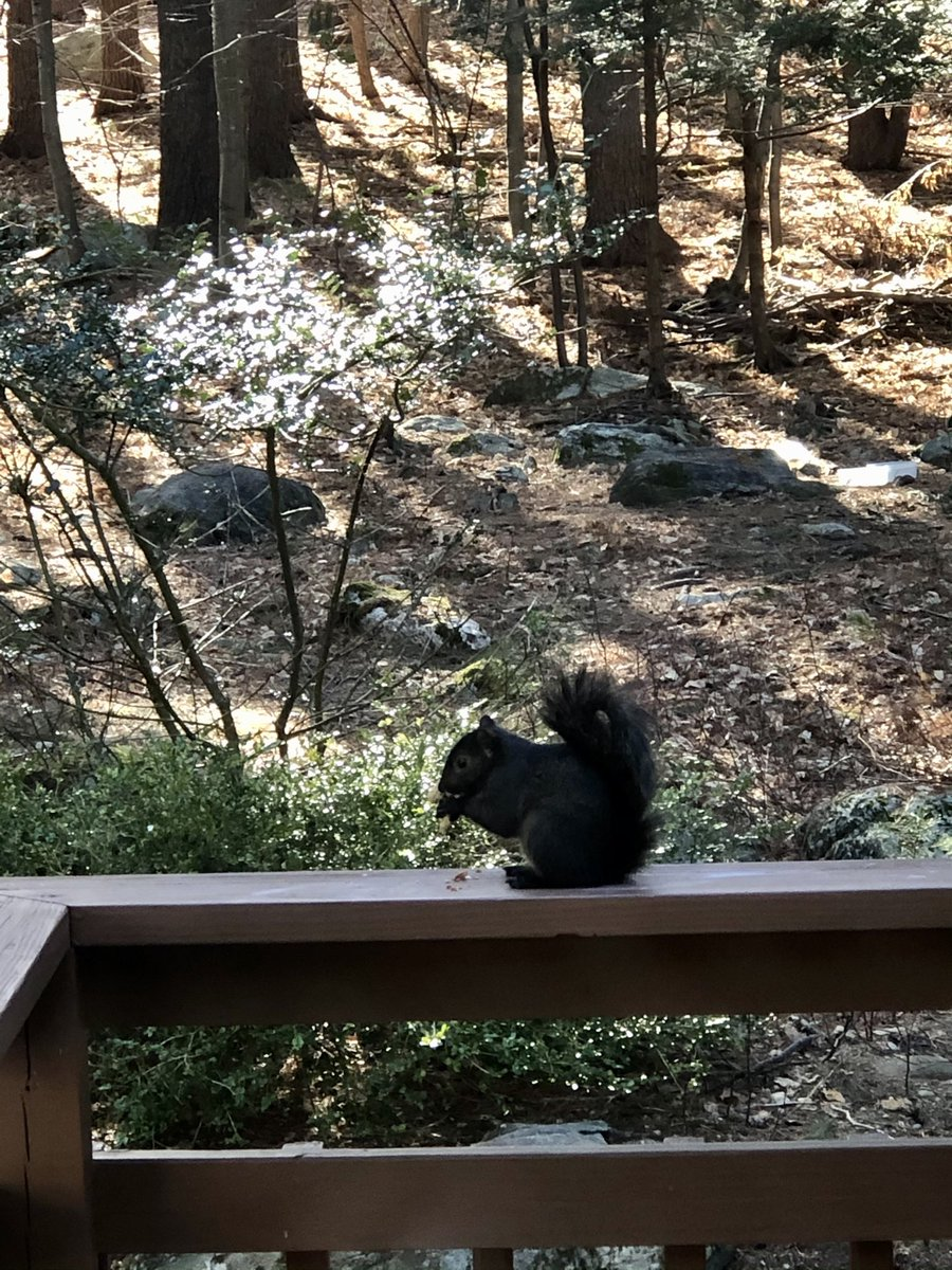 this squirrel in my backyard #dionnewarwick