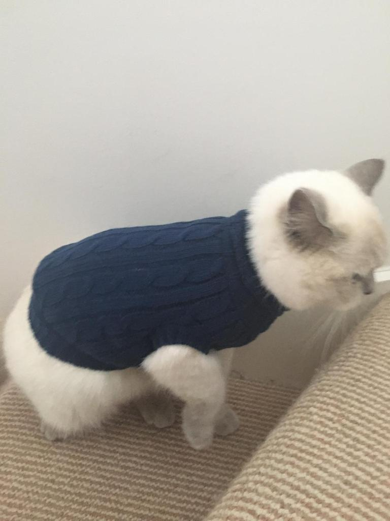 Little dude with his new winter coat 🐈#dionnewarwick