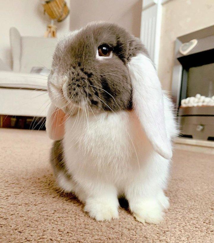 Porque coelho também é pet! 🐾🐰🐇 #bunny #pet #coelho #apto   Vi no