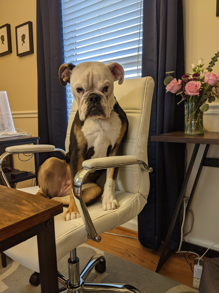 @dionnewarwick I work from home and my dog, Gilly, sits in my chair and looks at people during meetings. #dionnewarwick