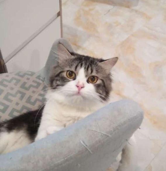 Kucing milik Sonia yang diberi nama