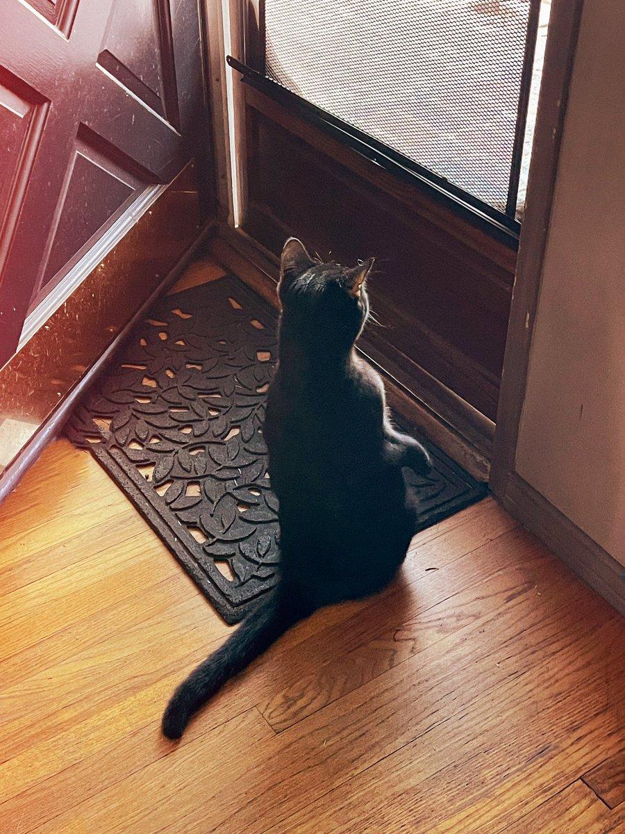 Tf she doing? #catsjudgingmarjorie