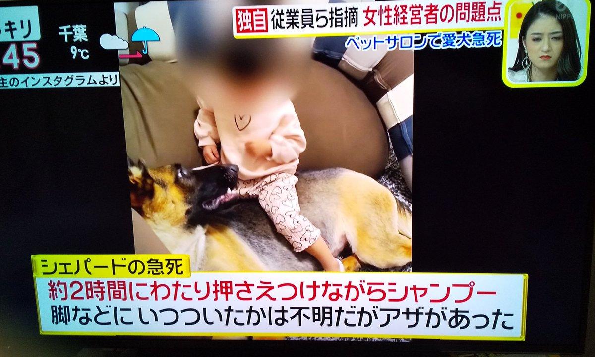アダム シェパード 【事故or虐待】大山田真美は逮捕?わんわんハウス若松店の店長
