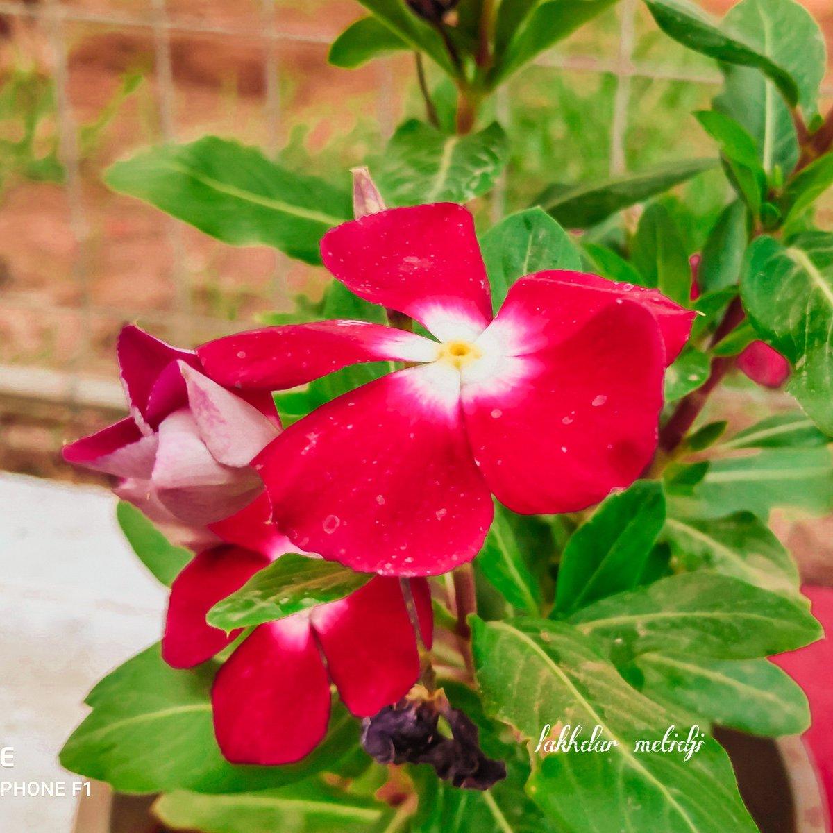 Good morning . #good #goodmorning #God #Flowers #Like #love @ashleyredxxx