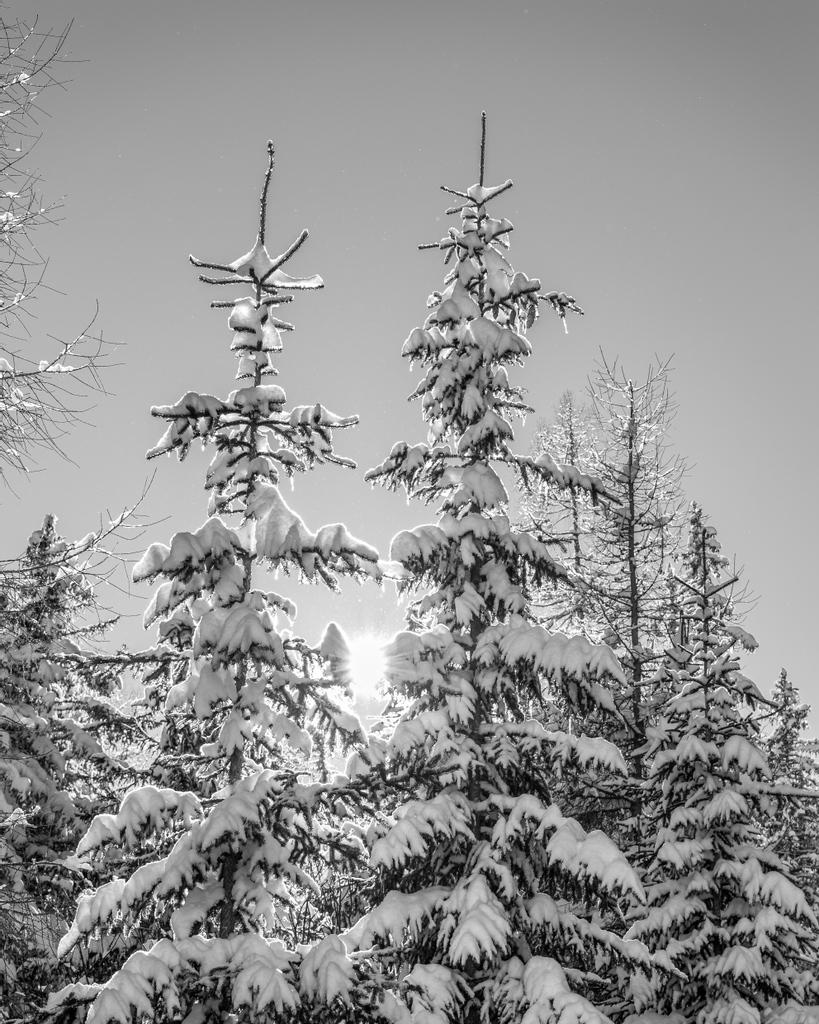 BW Winter 008 #bwseries #winter #photography #bymoalach #photooftheday #naturephotography #bealpha