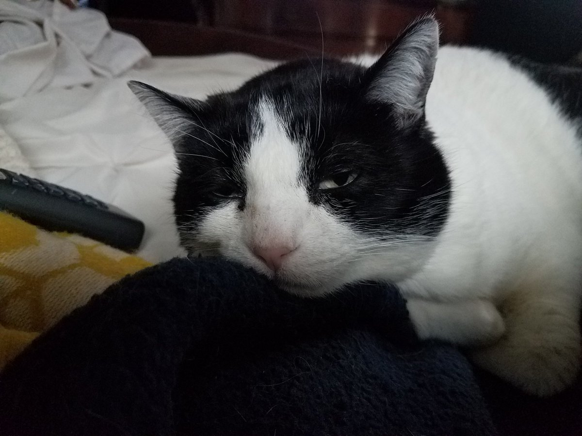 You disgust me, Marjorie Taylor Greene. #catsjudgingmarjorie #cowcat #CatsOfTwitter