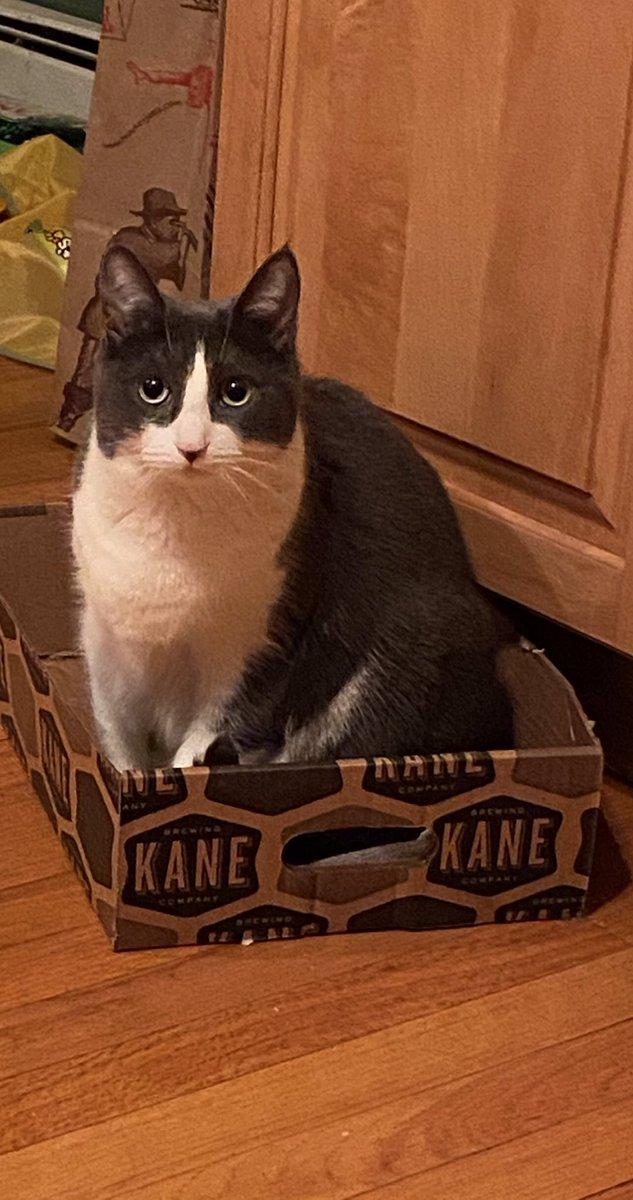 Lucy doesn't like seditionists #catsjudgingmarjorie