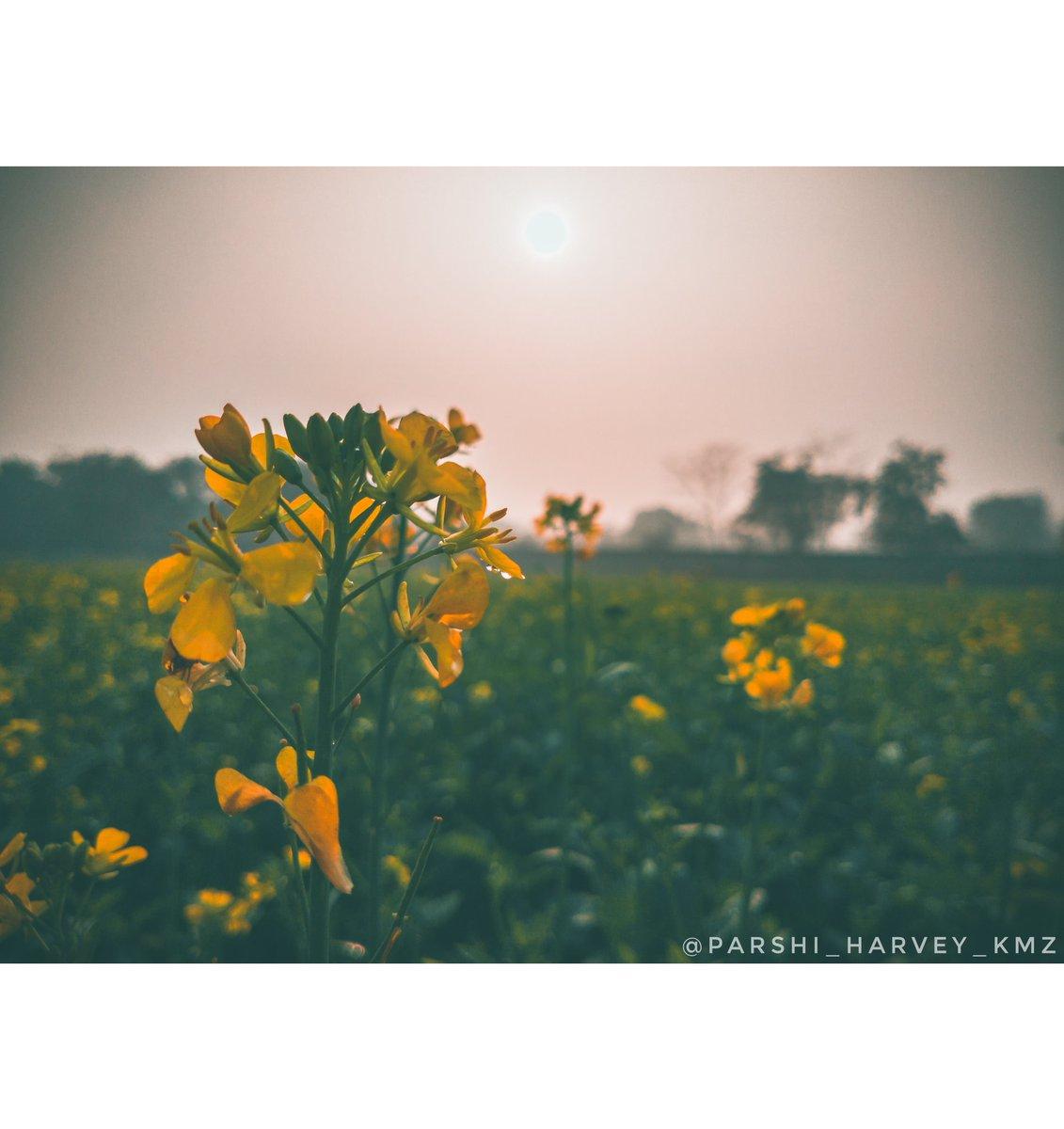 #nature #field #summer #flower #flora #landscape #sun #hayfield #season #rural #sunset #grass #sky #farm #floral #country #beautiful