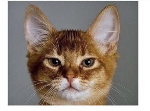 Hey #catsjudgingmarjorie