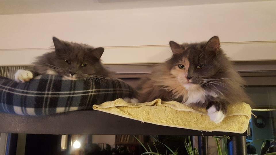 Smokey and Sunny are thoroughly disgusted! #catsjudgingmarjorie