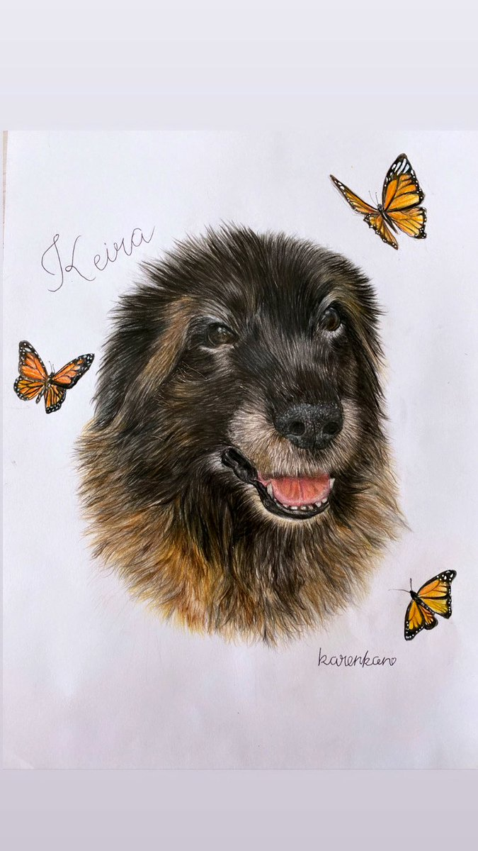 Doggie Commissions I've done lately🐶❤️ オーダーいただいた可愛いワンちゃんのの絵が完成しました🥰仕上げに蝶々を散らしました🦋✨  #commissions #doggie #dogdrawing #drawing #art #artworks #artoftheday #youngartist #オーダー #色鉛筆画 #鉛筆画 #お絵かき