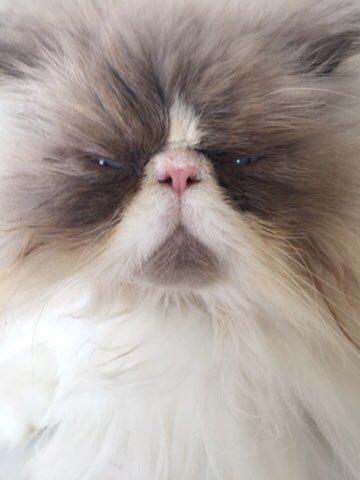 Marjorie Taylor Greene is a SedishBish, and that's that on that.  #catsjudgingmarjorie
