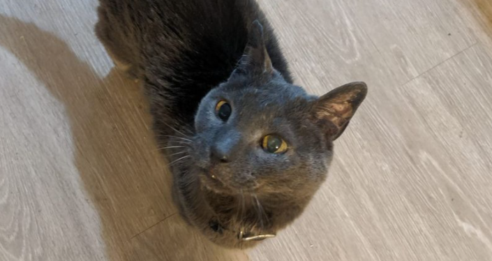 #catsjudgingmarjorie My cat says he might be a Russian Blue, and so is untrustworthy and known for his corruption (and peeing in corners), but he would not stoop so low as to consort with Marjorie Taylor Greene.