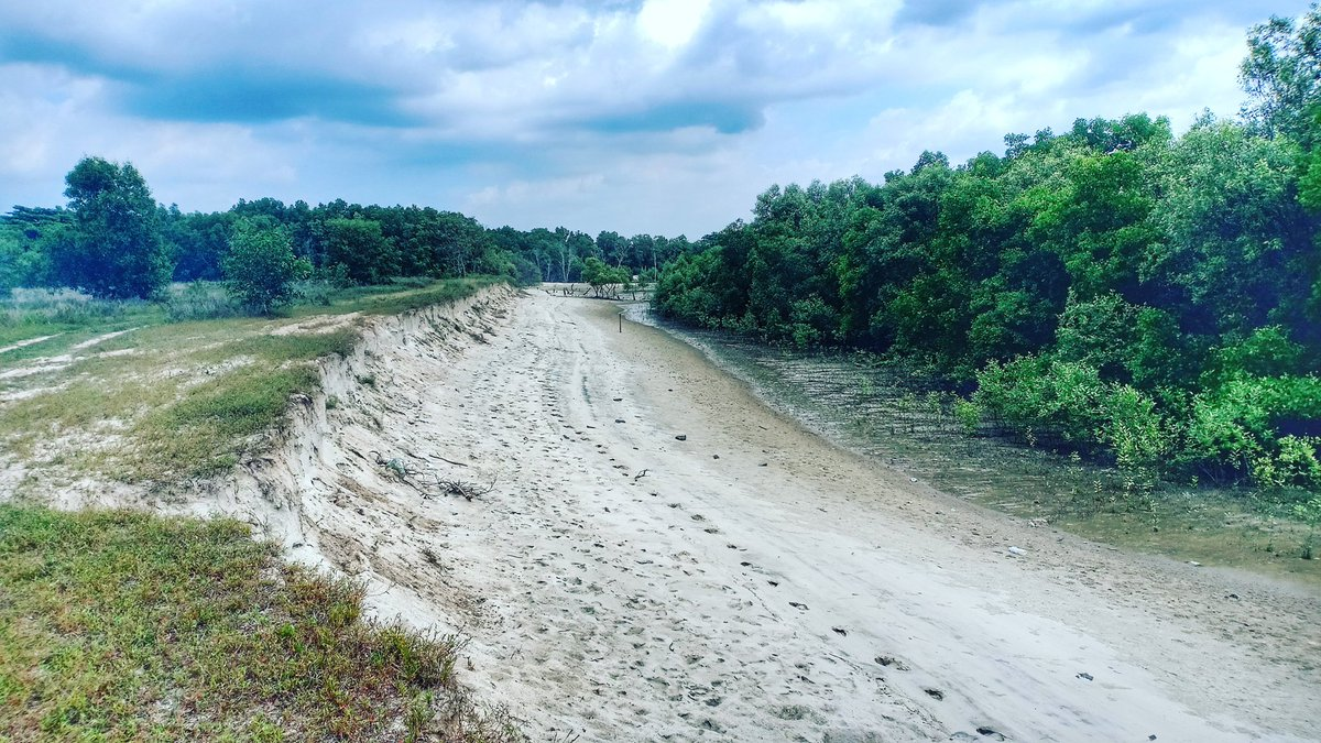Mangrove trees in front of sandy beach during low tide. #landscape #beach #pantai #pokokbakau #mangrove #seaside #sea #river #scenery #nature #naturelover #ecosystem #travel #explore #outdoor #outside #fishing #camping #scubadiving #hiking #naturephotography #landscapephotography